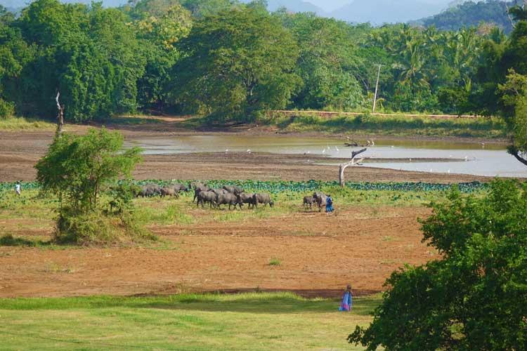 Jetwing Lake Hotel Dambula Sri Lanka Review - view of lake
