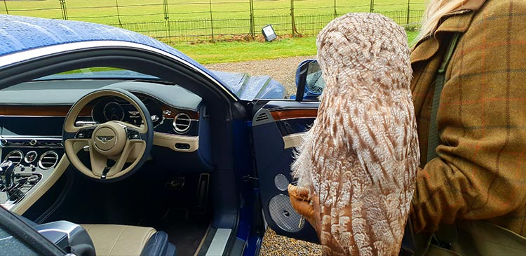 Swinton Estate Bird Life MenStyleFashion Bentley GT