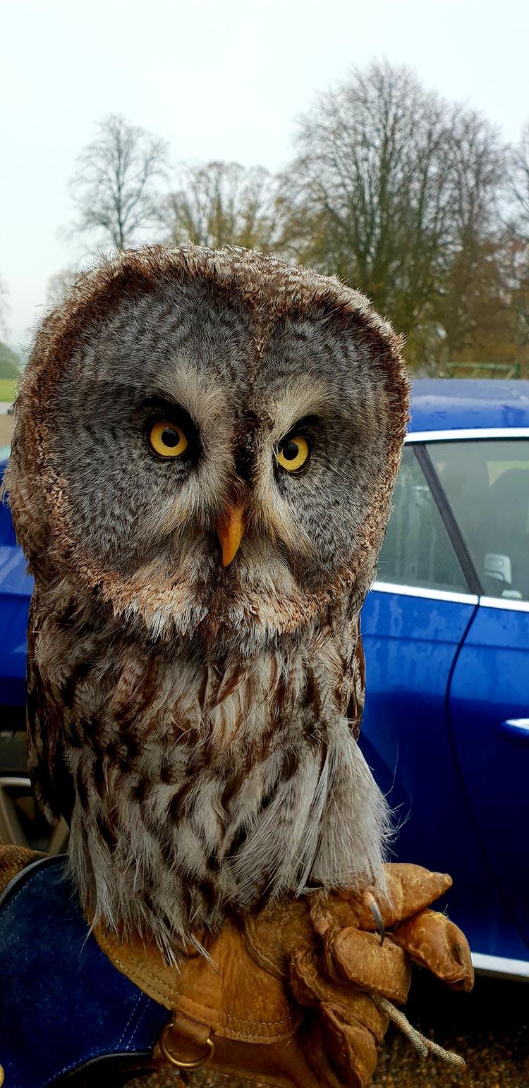 Owl Swinton Estate
