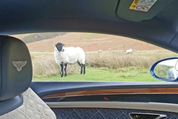 Lake District Wool Lambb Bentley GT