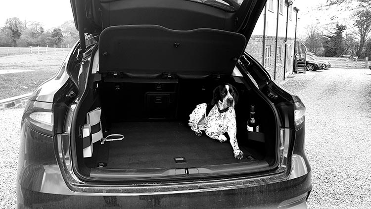 Maserati Levante V6 SUV - The Black Swan Reviewed dog