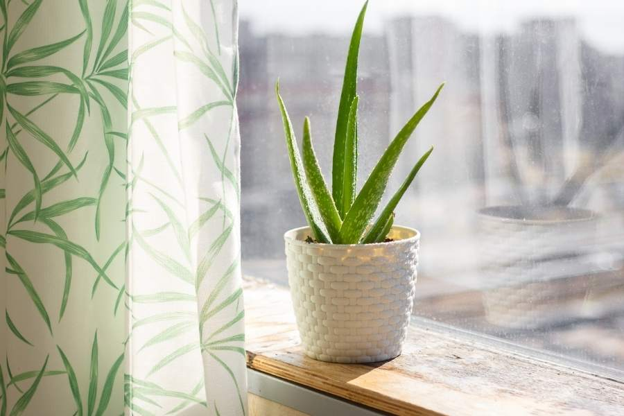 Easy To Maintain Exotic Indoor Plants